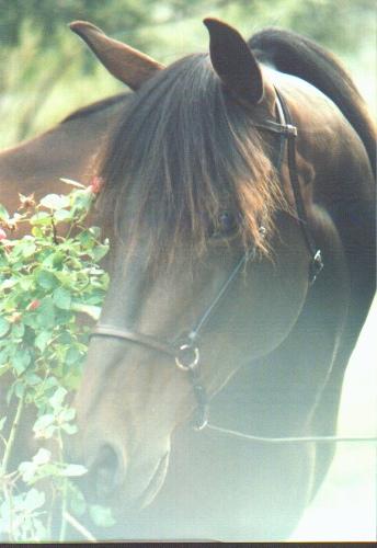 ladyhawke photo